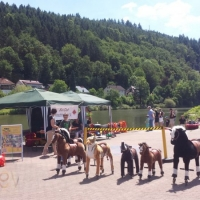 Animal Riding, Lebendiger Neckar Hirschhorn 2017 (27)