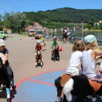 Animal Riding, Lebendiger Neckar Hirschhorn 2017 (4)