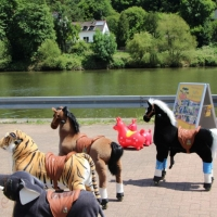 Animal Riding, Lebendiger Neckar Hirschhorn 2017 (40)